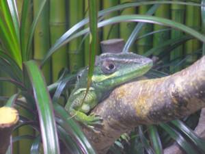 Im Reptilienhaus