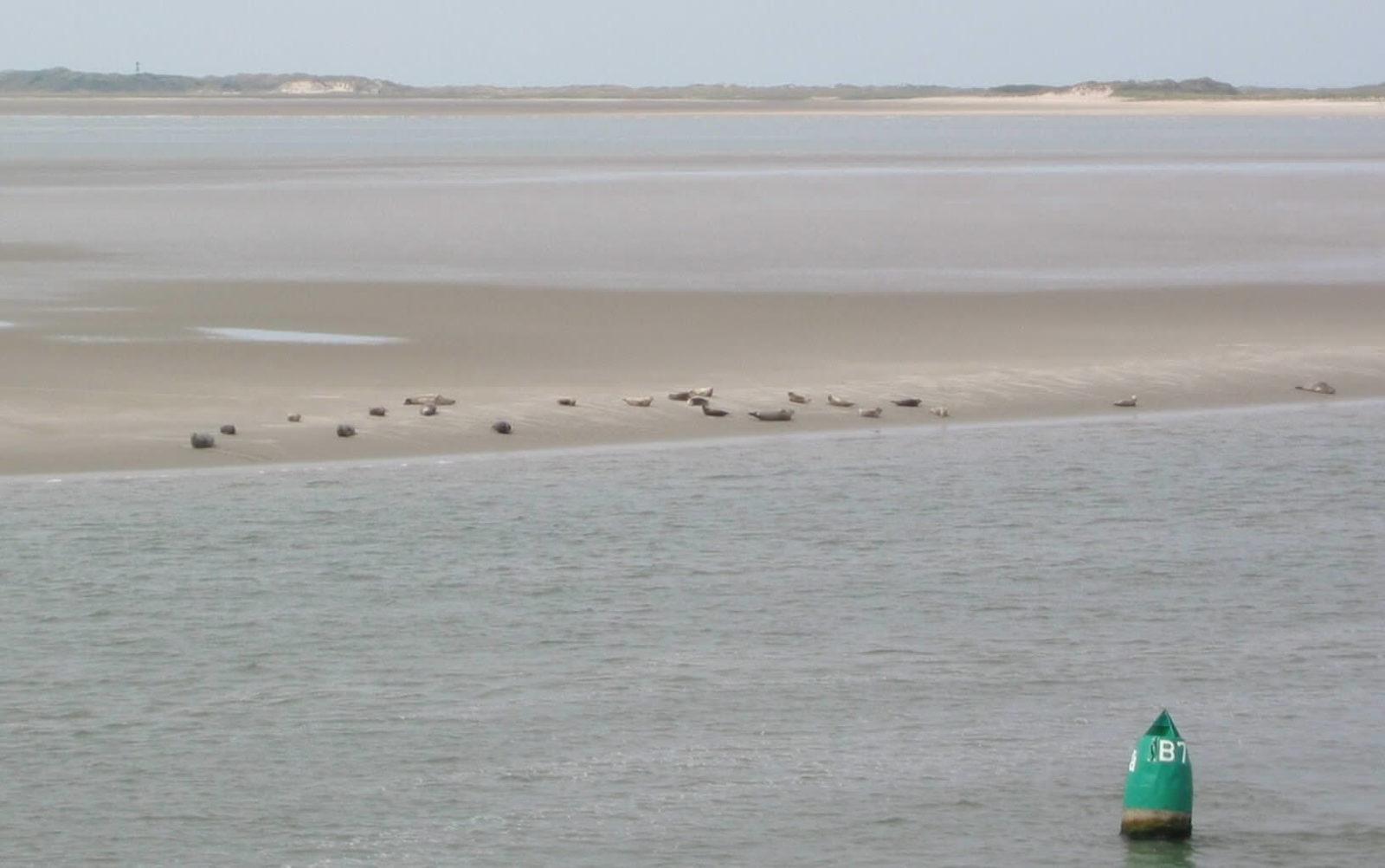 Seehunde auf der Sandbank vor Nerderney