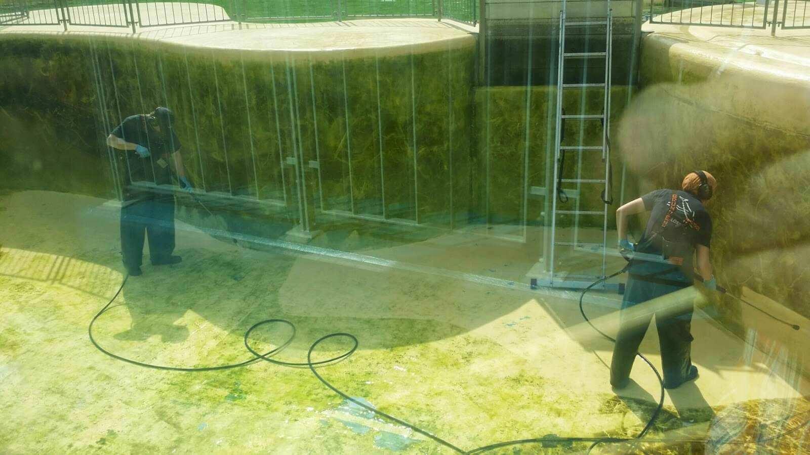 Reinigung des Beckens