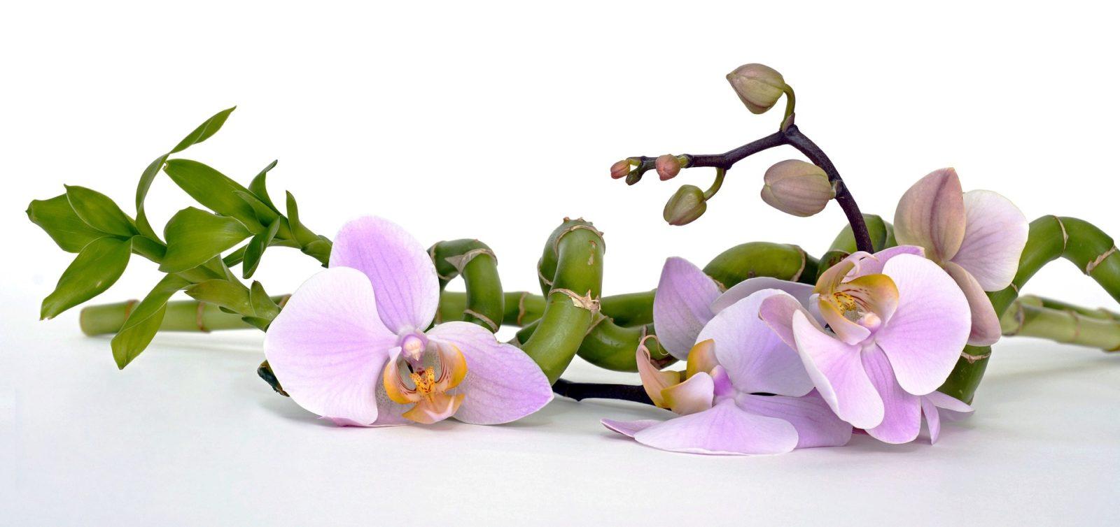 Bambus und Orchidee