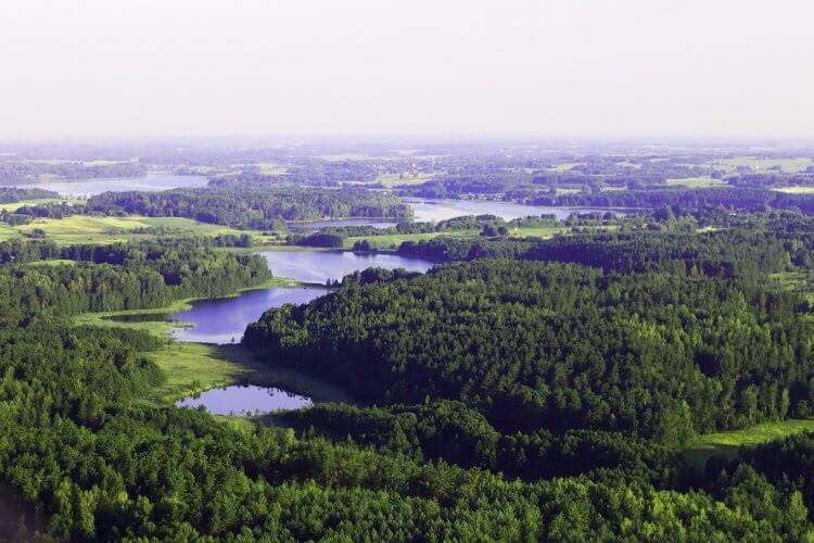 Wälder in Litauen