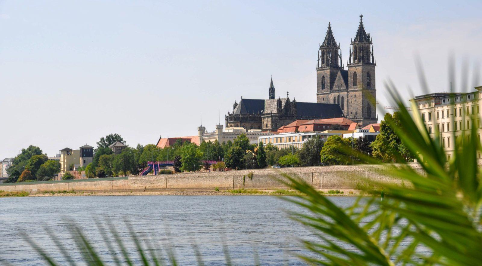 Magdeburger Dom mit Palmen
