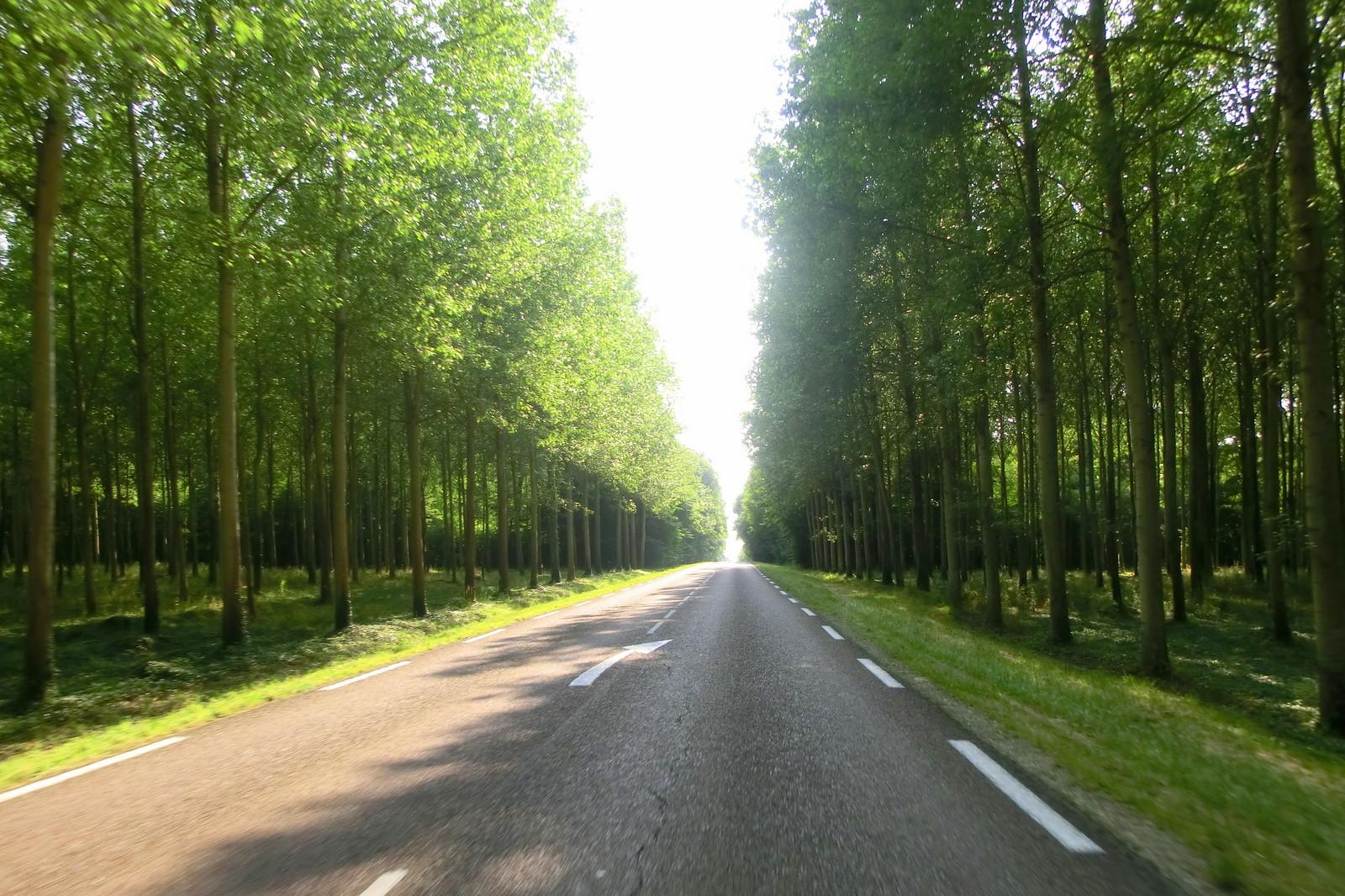 Frankreichs Wälder
