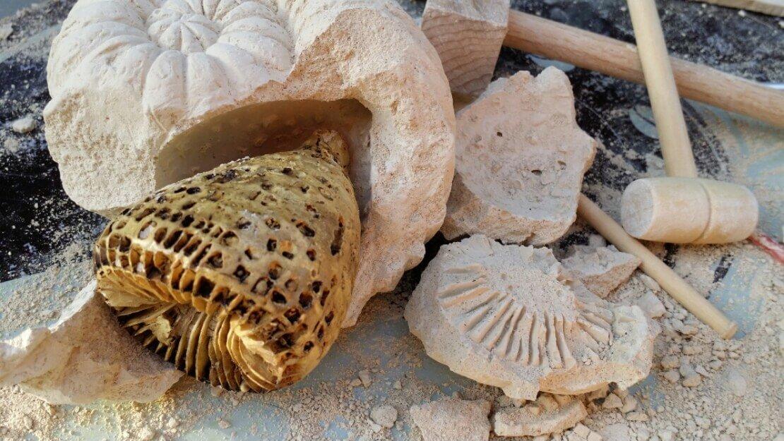 Eingeschlossene Fossilien befreien