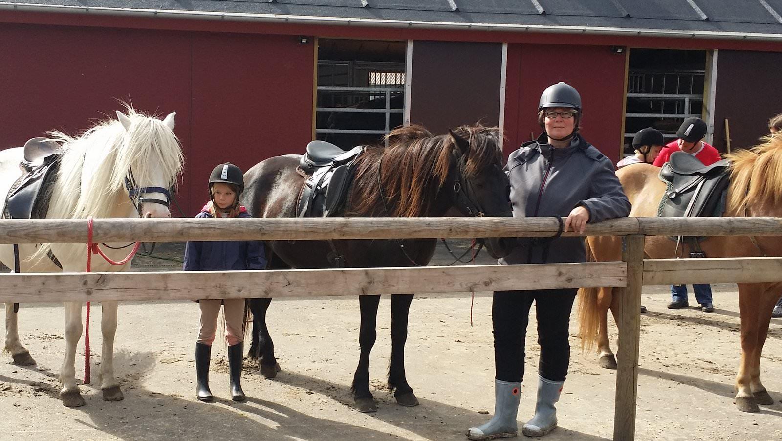 Pferde putzen und satteln
