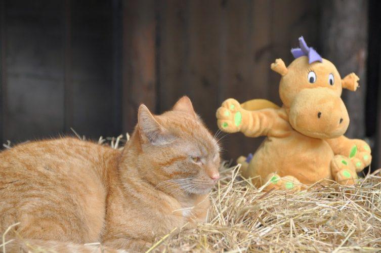 Katze und Kuscheltier