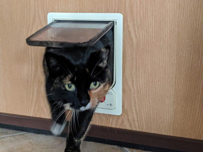 Katze kommt durch Katzenklappe