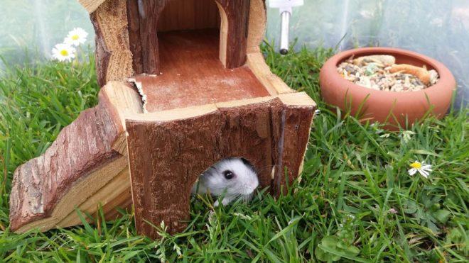 Der Hamster im Garten