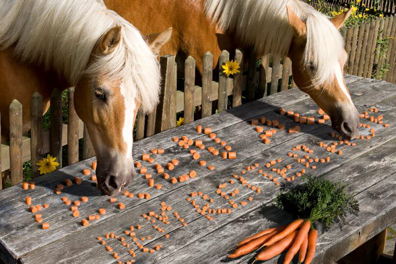 2 Pferde fressen Karotten