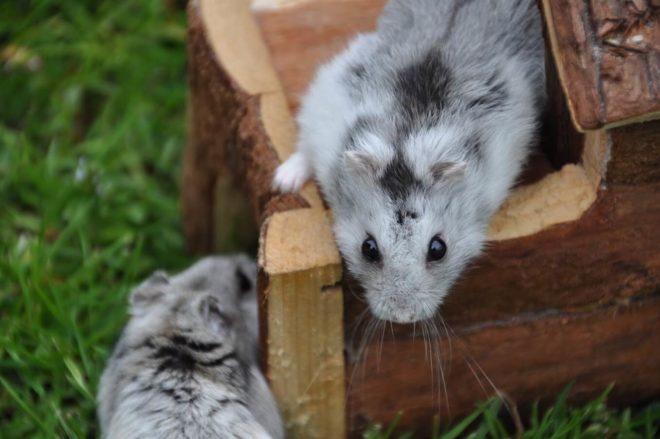 zwei Hamster