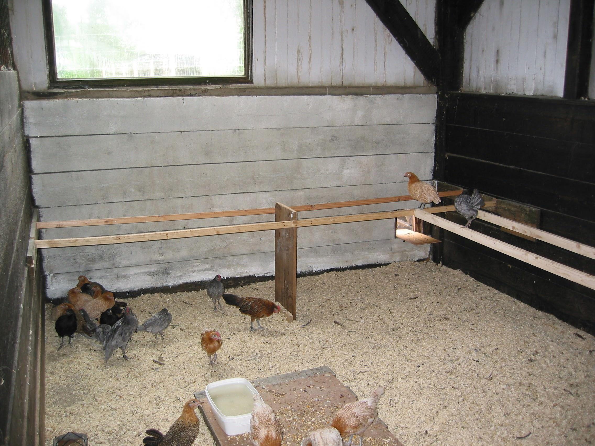 Sitzstangen im Stall