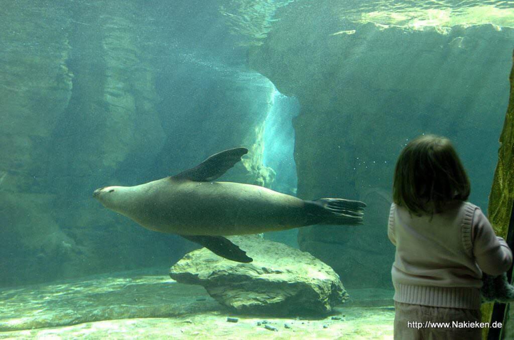 Kind bewundert Aquarium