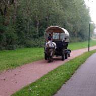 Langeoog Kutsche (Alles für den Familienurlaub auf Nordseeinsel Langeoog)