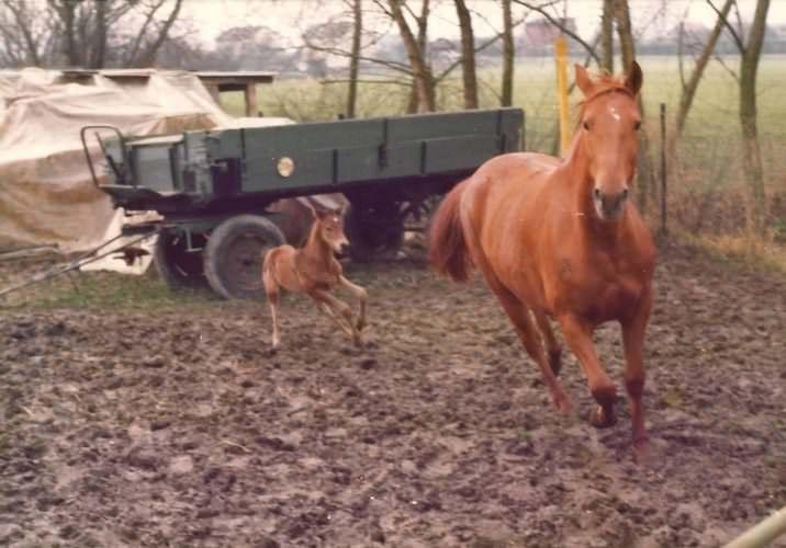 Carmen mit Fohlen