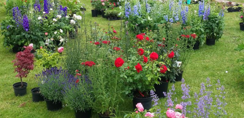 Blumen und andere Pflanzen