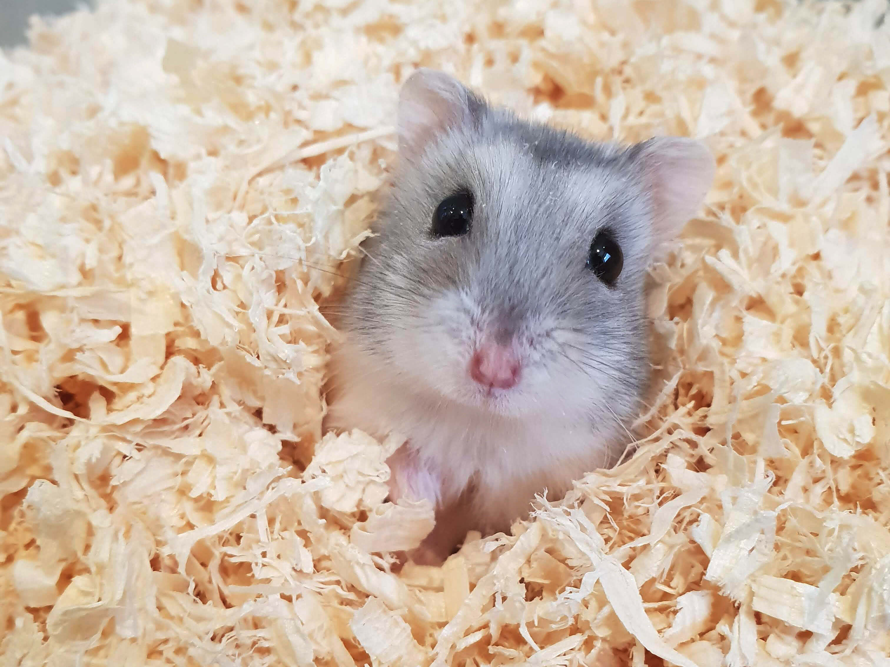 "Unser Hamster ""Bonsai"""