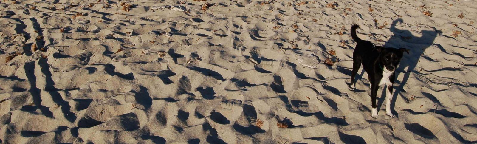 Der Hund im Sand ist glücklich