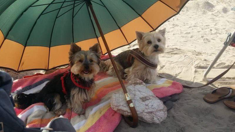 Lotte unter dem Sonnenschirm