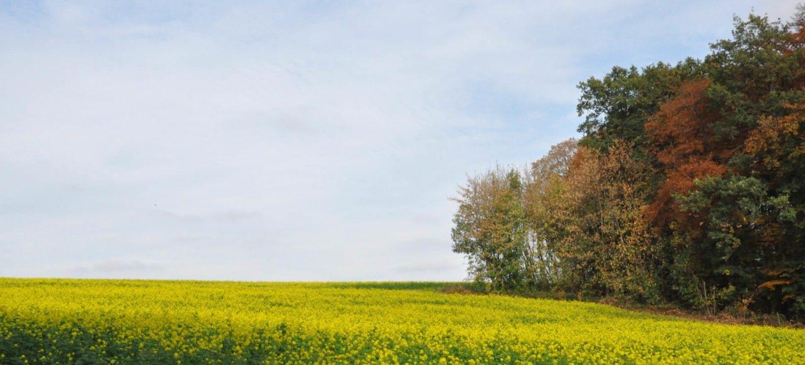 gelbe Felder und grüne Wiesen