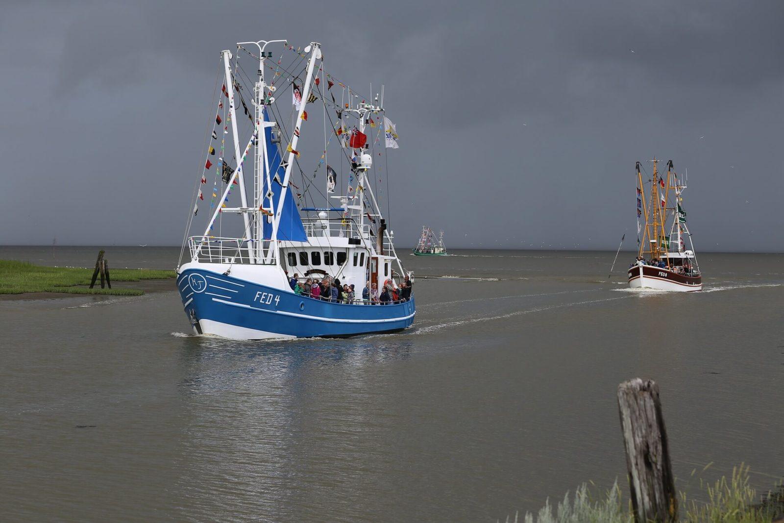 Hafen Fedderwardersiel Kutterregatta