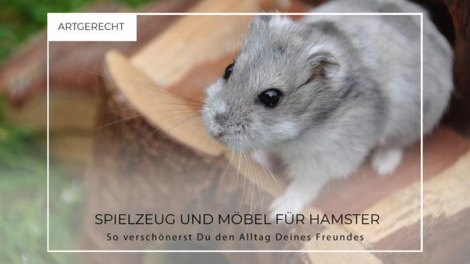 Kleiner Hamster