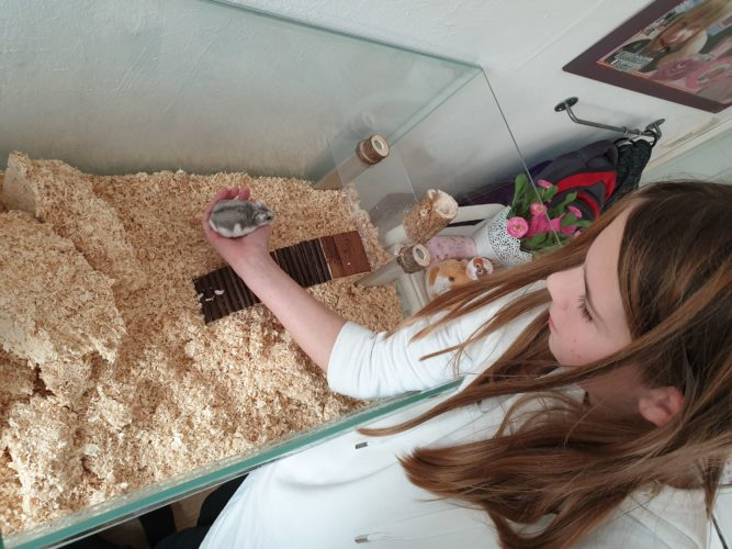 Hamsterkäfig wieder einrichten