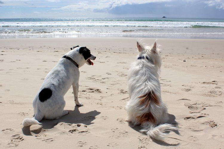 Unser eigener Hundestrand