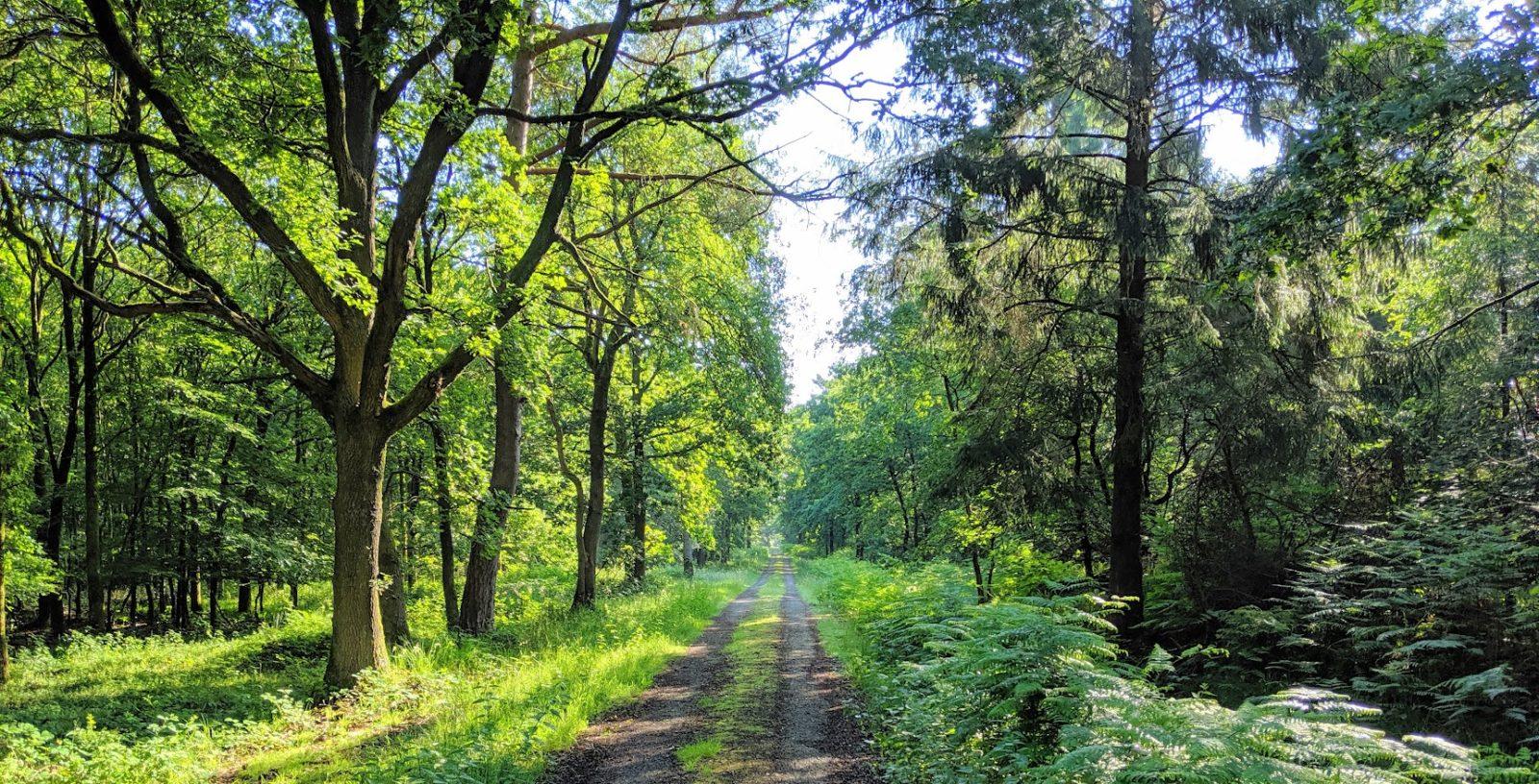 Unser Wald in Pfalzdorf