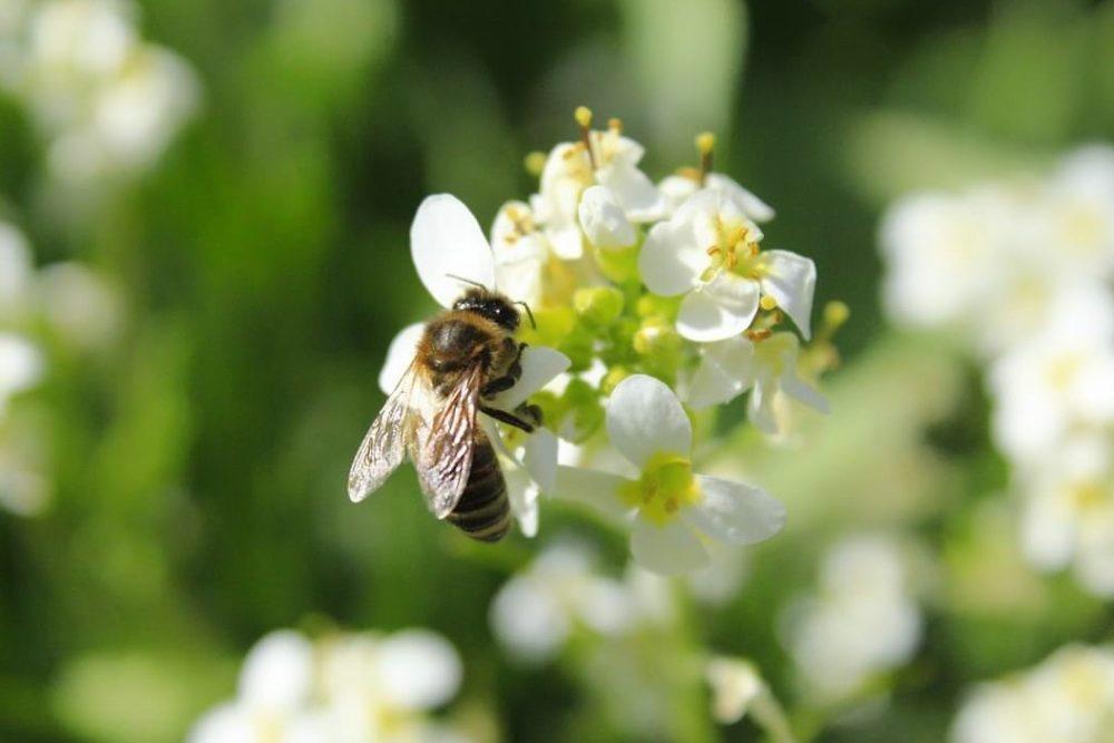 Bienen im Gaten