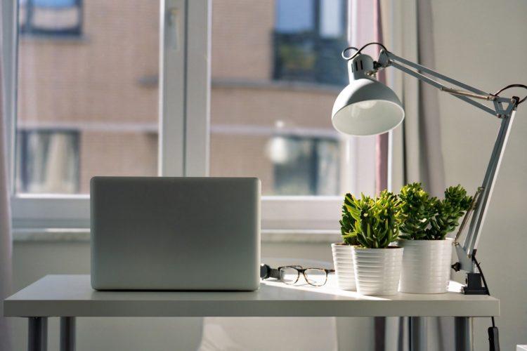 Zimmerpflanze im Büro