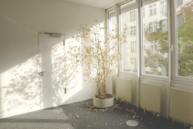 Vergessene vertrocknete Zimmerpflanze