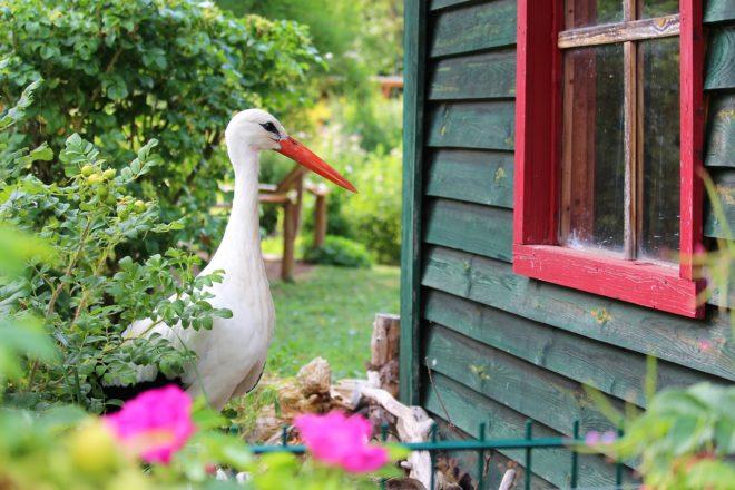 Der Storch und das Kinderholzhaus im Garten